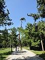 天橋立 - panoramio (3).jpg