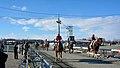 帯広競馬場でパドックから本馬場へ入場する風景(2016年1月1日の第3競走).JPG