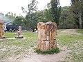 木化石 - panoramio (1).jpg