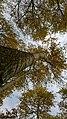 湖边秋树 - panoramio.jpg