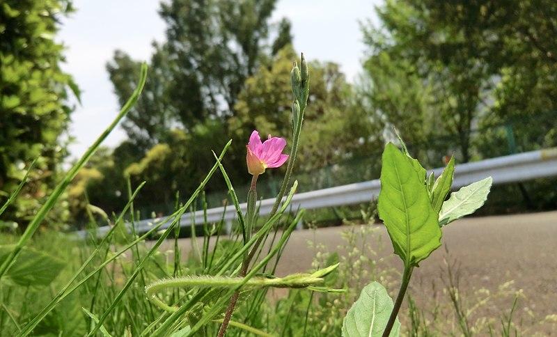 File:道路と花 - panoramio.jpg