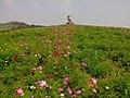 黃陂木蘭草原.jpg