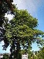 01300jfCapalangan Road Sulipan Apalit Pampanga Peter Shrine Calumpitfvf 07.JPG