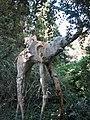 022 Castell de Púbol (Casa Museu Gala Dalí), un dels elefants de potes llargues al jardí.jpg