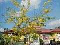 08995jfOriental Pavillion, Pagcor Club Santa Cruz, Guiguinto, Bulacanfvf 06.jpg
