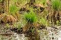 15-05-09-Biosphärenreservat-Schorfheide-Chorin-Totalreservat-Plagefenn-DSCF5544-RalfR.jpg