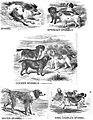 1853-dogs 04.jpg