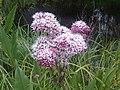 1 növény 6 - 2011.07.20.jpg