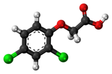 Ball-and-stick model of 2,4-dichlorophenoxyacetic acid