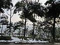 2010年12月15日夜里的那场雪 - panoramio (17).jpg