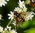 2014-08-10 11-15-45 insecte.jpg