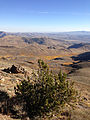 2014-10-09 08 59 52 Limber Pine near 9400 feet on the western slopes of Granite Peak in Humboldt County, Nevada.JPG