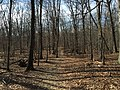 2016-02-08 11 31 21 View west along the Gerry Connolly Cross County Trail between Miller Heights Road and Jermantown Road in Oakton, Fairfax County, Virginia.jpg