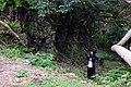 2016-02-26 Shimotabaru-jou,Hateruma 下田原城・ぶりぶち公園 波照間島 DSCF2546.JPG
