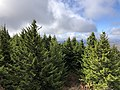 2019-10-27 11 56 23 View west-southwest across a Red Spruce forest from the observation tower on Spruce Knob in Pendleton County, West Virginia.jpg