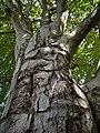2020-06-13 LSG Melatenfriedhof Köln (NRW) 04.jpg