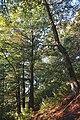 21-215-5001 лісовий заказник Темнатик.jpg