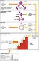 2509 Carbohydrate Metabolism.jpg