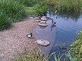 2 Mixt flock W131.jpg