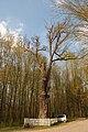 300-літній дуб (Вінниця) 01.JPG