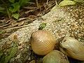 4087Ants Common houseflies foods delicacies of Bulacan 58.jpg