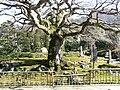 8番 清泰山 西善寺 コミネモミジ - panoramio.jpg