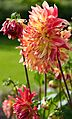 ADD SOME COLOUR TO YOUR LIFE (FLOWERS IN A PUBLIC PARK)-120117 (29194467651).jpg