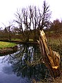 A Broken Willow - panoramio.jpg