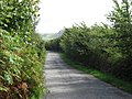 A Lane From Capel Parc - geograph.org.uk - 247194.jpg