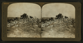A Vast cloud of pigeons returning from feeding ground. Pigeon Farm, Los Angeles, Cal., U.S.A, by H.C. White Co..png