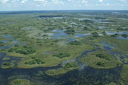 A View of the Delta.jpg