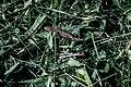 A lizard in the grass.jpg