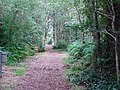 A pathway through Peatlands Park - geograph.org.uk - 1396437.jpg
