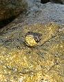 A snail in rock.jpg