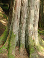 A tree stump (475877834).jpg