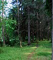 A way through the woods (2615428834).jpg