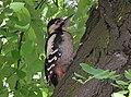 Ab bird 005.jpg
