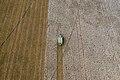 Aerial view of cotton harvester making vertical stripe in Batesville, Texas field.jpg