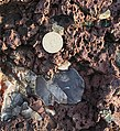 Agate-bearing rocks at Scurdie Ness - geograph.org.uk - 633868.jpg