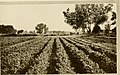 Agricultural Nevada (1911) (17945313385).jpg