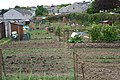 Allotment Gardens and New Housing Estate, Liskeard - geograph.org.uk - 171797.jpg