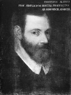 Prospero Alpini Venetian physician and botanist (1553-1616)
