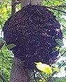An abandoned beehive.jpg
