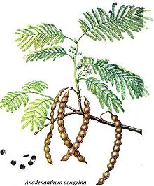 Anadenanthera peregrina.jpg