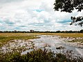 Anawilundawa Wetland.jpg