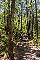 Aokigara forest near wind cave 03.jpg