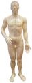 Archie McPhee acupuncture 2.png