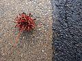 Art texture asphalt spiky sphere.jpg
