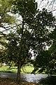 Artocarpus Heterophyllus 05.jpg