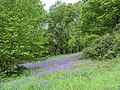 Ashworth Valley Woods - geograph.org.uk - 431465.jpg